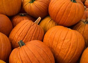 Pumpkins, Pumpkins,Pumpkins!