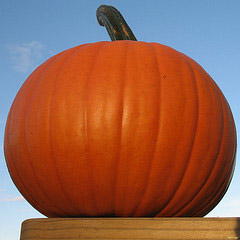 Just the perfect pumpkin!