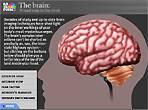 The Brain - An AwesomeCreation