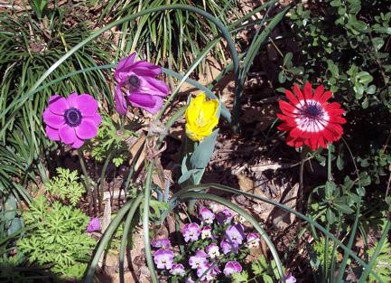 Beautiful, cheerful flowers to greetyou