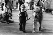 child leading dog